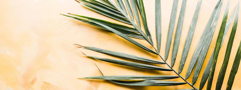 Bible Reading: Palm Sunday